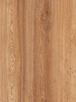 Campania Oak